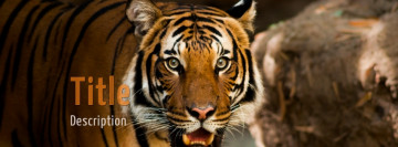 Tiger Facebook cover template photo
